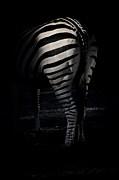 Karol  Livote - Lines Of a Zebra