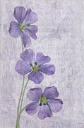 Trio Prints - Linum Print by John Edwards