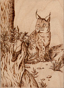 Wildlife Pyrography Posters - Linx Poster by Jeanette Kabat