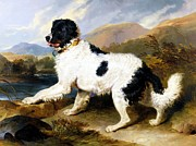 Landseer Paintings - Lion - A Newfoundland Dog by Pg Reproductions