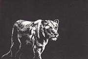 Lion Print by Alexis Sobecky