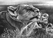 Lion Drawings Framed Prints - Lion and Cub Framed Print by Jerry Winick