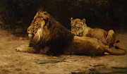 Lioness Posters - Lion and Lioness at Rest Poster by Armour George Denholm