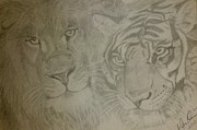 Pencil On Canvas Drawings Posters - Lion and Tiger Poster by Melissa Nankervis