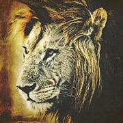 Angela Doelling AD DESIGN Photo and PhotoArt - Lion