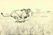 Lion Drawings - Lion Charging by Philip Goodwith