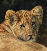 David Stribbling - Lion Cub