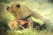 Lion Cub II Print by Roy McPeak