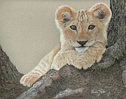 Wild Animal Pastels Posters - Lion Cub Posing in Tree Poster by Linda Taylor