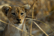 Stefan Carpenter - Lion Cub