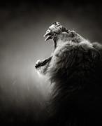 Lion Displaying Dangerous Teeth Print by Johan Swanepoel