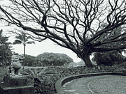 Japanese Dog Prints - LION DOG and TREE - LILIUOKALANI PARK - HAWAII Print by Daniel Hagerman