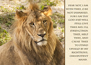 Encouragement Posters - Lion Encouragement Poster by Carolyn Marshall