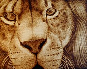 Original Wood Burning Pyrography - Lion Face by Cara Jordan