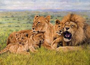 Wolves Painting Prints - Lion Family Print by David Stribbling