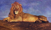 Mammals Digital Art Prints - Lion  Print by Filippo B
