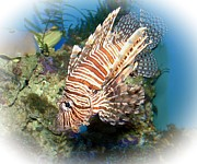 Preditor Metal Prints - Lion Fish 2 Metal Print by Tessa Fairey