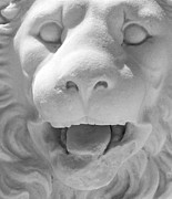 Closeup Sculpture Posters - Lion  Poster by Georgios Kollidas
