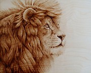 Drawing Pyrography Originals - Lion in the Distance by Cara Jordan