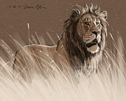 Digital Drawing Framed Prints - Lion in the Grass Framed Print by Aaron Blaise