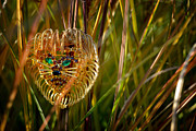 Jewelry Framed Prints - Lion in the Grass Framed Print by Amy Cicconi