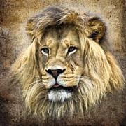 Lion King Print by Steve McKinzie