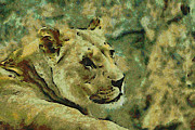 Lion Digital Art Metal Prints - Lion looking back Metal Print by Ernie Echols