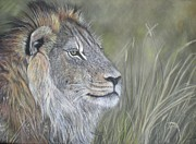 Lion Pastels Posters - Lion  Poster by Louise Macarthur Art and Photography