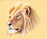 Mary Mayes Posters - Lion Poster by Mary Mayes