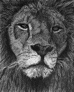 Lion Drawings Framed Prints - Lion of Judah Framed Print by Bobby Shaw