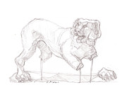Rhodes Drawings Posters - Lion of Rhodes Poster by Sharon McNeil