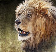 R christopher Vest - Lion Portrait