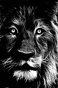 White Lion Posters - Lion Portrait Poster by Tilly Williams