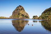 Auckland Prints - Lion Rock Piha New Zealand Print by Colin and Linda McKie