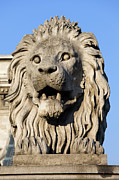 European Artwork Posters - Lion Sculpture on Chain Bridge in Budapest Poster by Artur Bogacki
