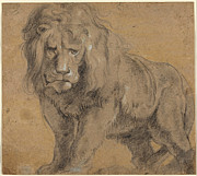 Lion Sketch Print by Paul Ruebens