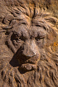 Face Shadow Prints - Lion Wall Print by Garry Gay