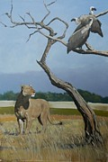 Robert Teeling - Lioness and Vultures