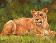 Lioness Painting Prints - Lioness Print by David Stribbling