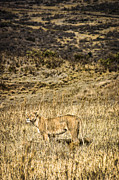 Travel - Tanzania - Lioness Looks Around by Darcy Michaelchuk