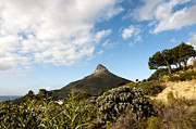 Cape Town Framed Prints - Lions head Framed Print by Fabrizio Troiani