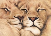 Lion Drawings Originals - Lions in Love by Genevieve Desy