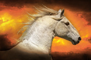 Forelock Photos - Lipizzan In The Clouds D7775 by Wes and Dotty Weber