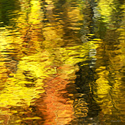 Liquid Posters - Liquid Gold Abstract Reflection Poster by Christina Rollo