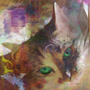 Kitten Digital Art - Lisa Beckons - Square Version by John Robert Beck