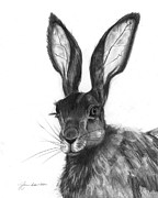 Bunny Drawings Prints - Listening Ears Print by J Ferwerda