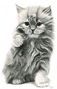 Animals Drawings - Little ball of fur / Red Persian kitten by George Horsey