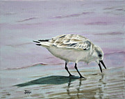 Shorebird Paintings - Little Bird on the Beach by Jimmie Bartlett