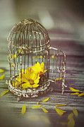 Sandra Cunningham - Little birdcage with flowers