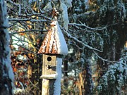 Rusted Tin Roof Photos - Little Birdhouse in the Woods by Charlie and Norma Brock